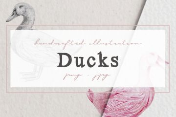 Hand drawn Ducks Illustrations